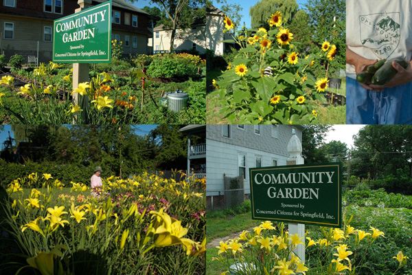 Beaumont and Dickinson Street Community Gardens