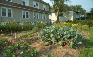 Dickinson Community Garden